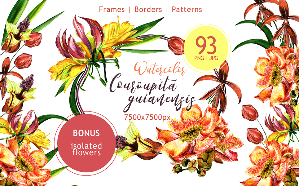 Couroupita Guianensis PNG Watercolor Set Illustrations