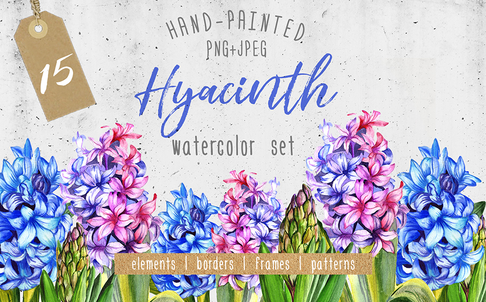 Colorful Hyacinth PNG Watercolor Illustrations