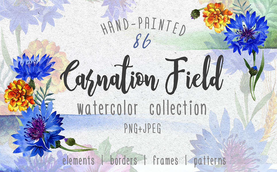 Carnation field PNG watercolor set Illustrations