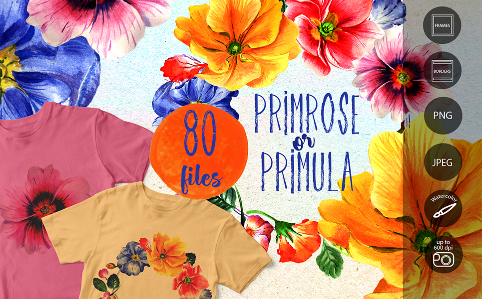Primrose Or Primula Flowers - PNG Watercolor Illustrations