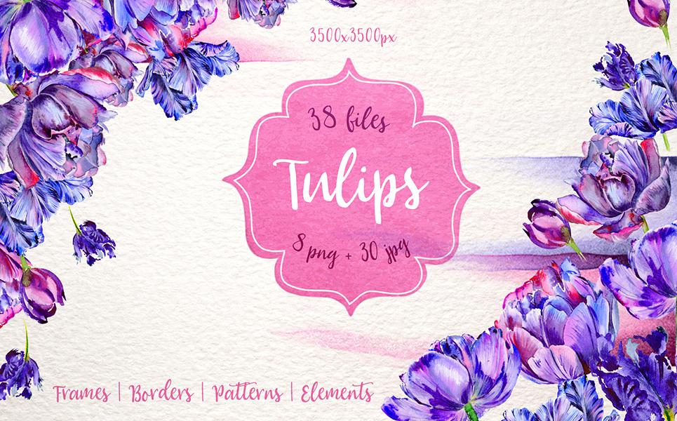 Lovely Purple Tulip PNG Watercolor Set Illustrations