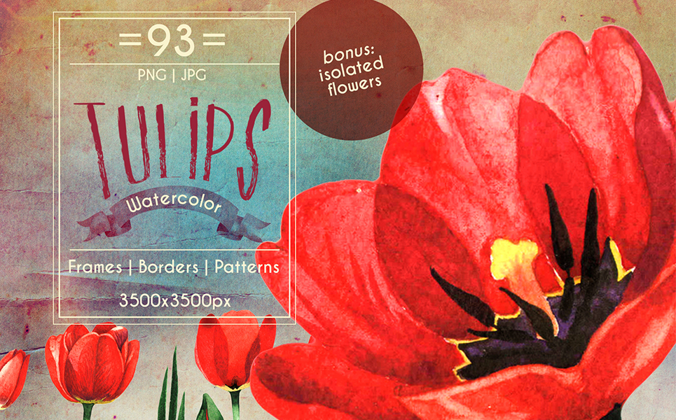 Amazing tulips PNG watercolor flower set Illustrations