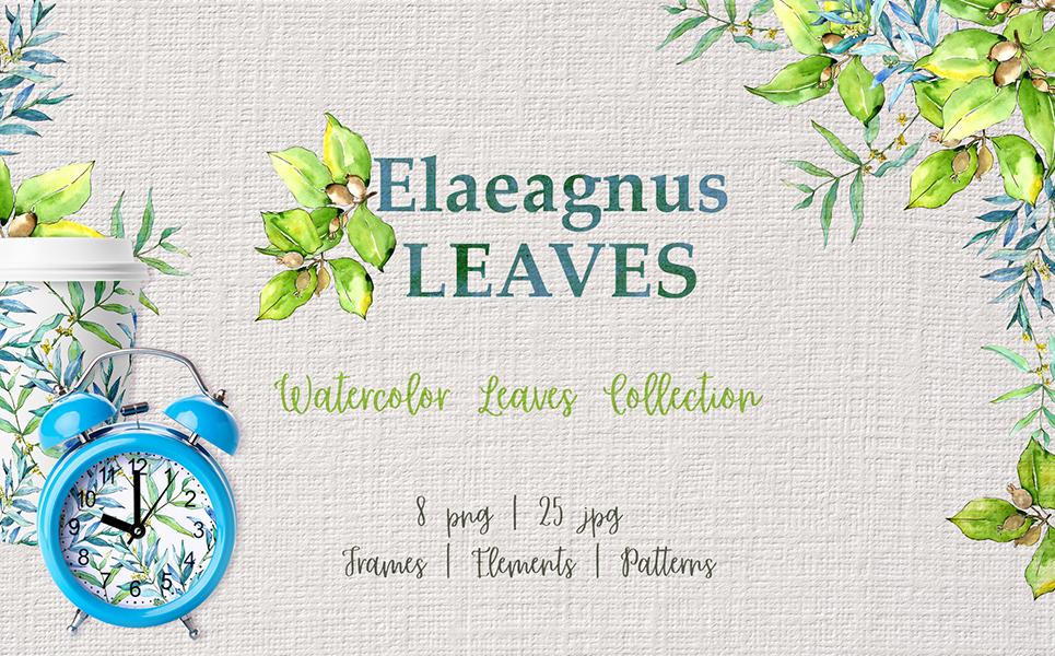 Elaeagnus Leaves Watercolor Png Illustrations