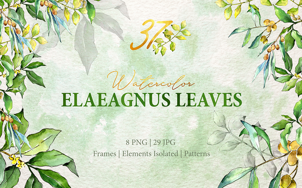 Watercolor Green Elaeagnus PNG Illustrations