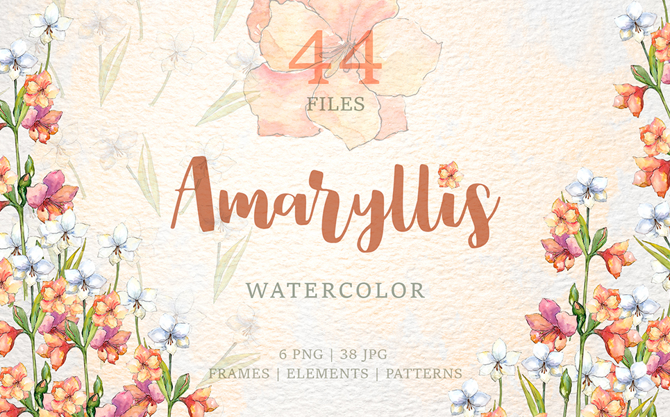 Amaryllis Flowers Watercolor Png Illustrations