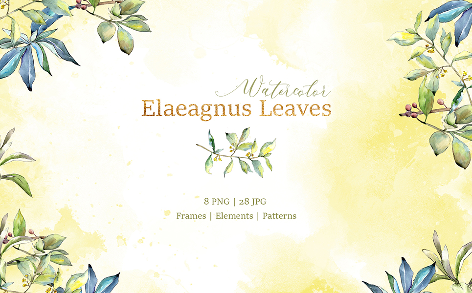 Elaeagnus Leaves Watercolor Png Illustrations