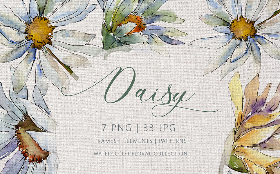DAISY Watercolor png Illustrations