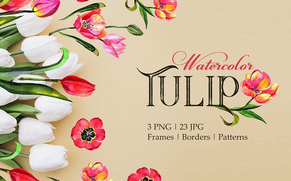Tulip Red Watercolor Png Illustrations