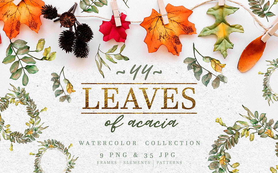 Leaves Of Acacia Watercolor Png Illustrations