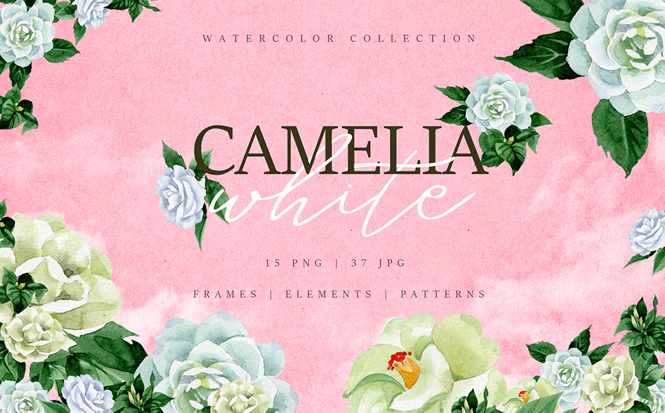 Camelia White Watercolor png Illustrations