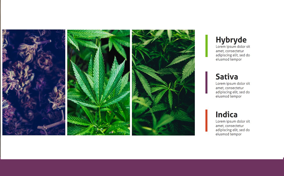 Weedly Medical Cannabis PowerPoint Template